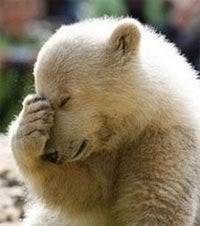 facepalm-bear.jpg